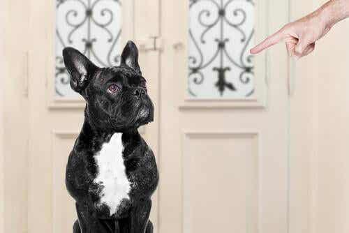 Hva gjør du galt når du trener hunden din?