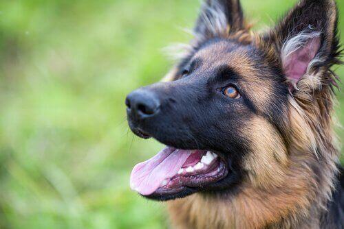 Slik kan du forbedre hundens selvsikkerhet