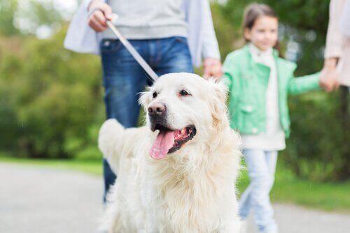 10 ting hunden din gjør for deg ubetinget