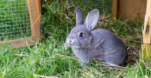 Et utendørs kaninbur, det ideelle hjemmet for kaninen din