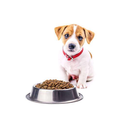 En hund foran en matskål