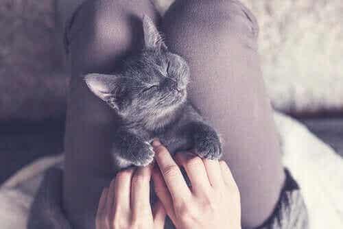 Hvor mange timer søvn trenger katter?