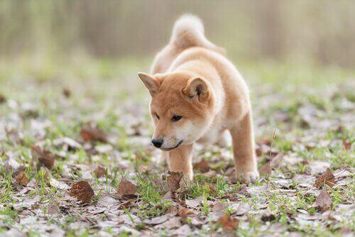 Lær om noen av ferdighetene til hunder!