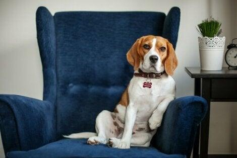 Hund hos hundepsykolog