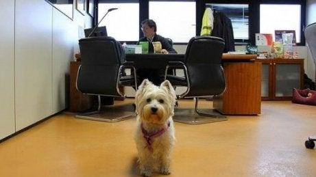 En hund på et kontor