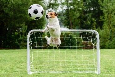 En hund som spiller fotball
