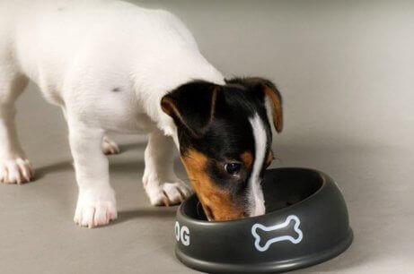 En hund som spiser fra skålen sin