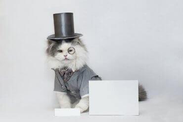En katt i flosshatt og monokkel