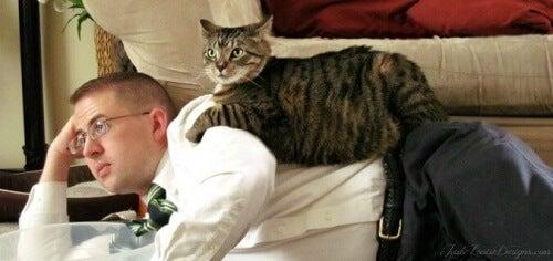 Slik styrker du forholdet til katten din