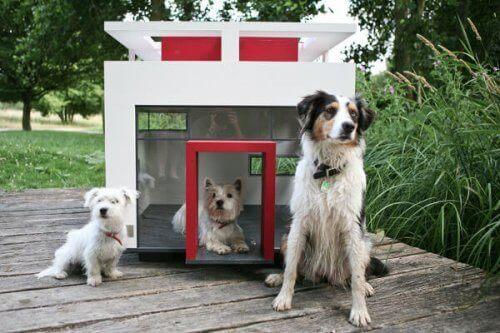 Luksuriøse hundehus til hundretusenvis av kroner