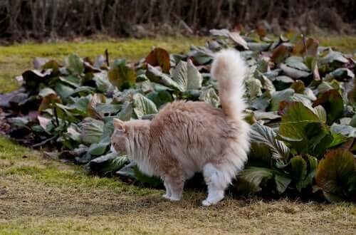 lukten av katteurin