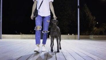 En person som går med en hund