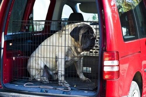 En hund som sitter i et bur i en bil