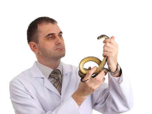 Vurderinger før man skaffer seg et reptil som kjæledyr
