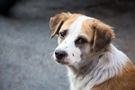 En tristseende hund