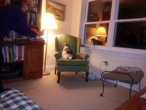 Verdens tykkeste katt bor på et hotell