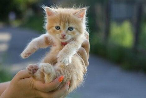 En kattunge blir holdt opp i luften.