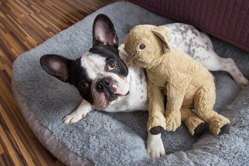 Kan man ha delt omsorg for et kjæledyr?