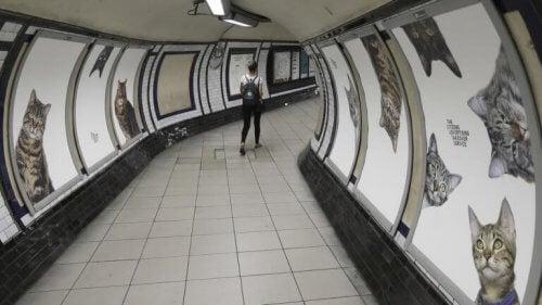 Londons undergrunnsbane ble bombandert av kattebilder i flere uker.