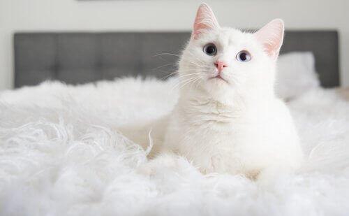 Tre ting du lærer når du adopterer en katt
