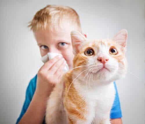 Mange har allergi mot katter: Hvorfor er så mange påvirket?
