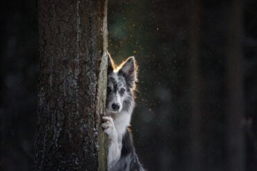 En hund som gjemmer seg bak et tre