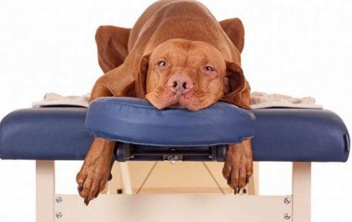 Spa for kjæledyr, nå kan de og slappe av!