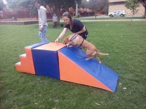 Hund som trener utendørs.