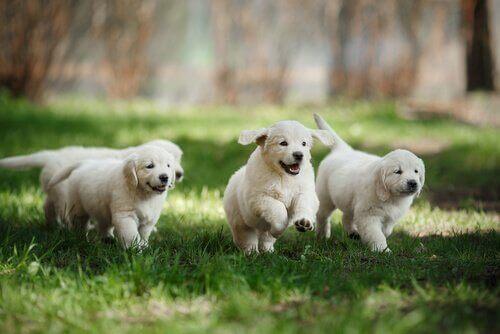 Hvordan vite om en hund er godt sosialisert