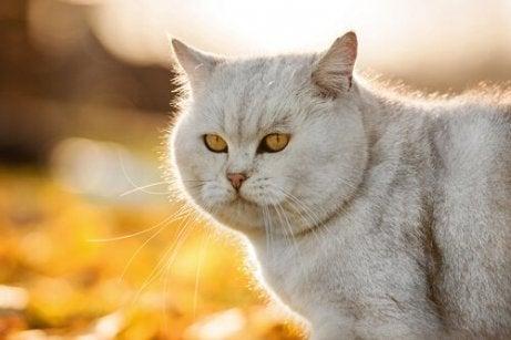 En katt poserer med den blanke pelsen