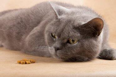 En katt uten matlyst