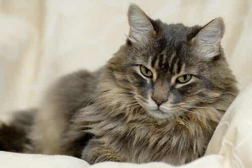 Les alt du trenger å vite om kattens pels