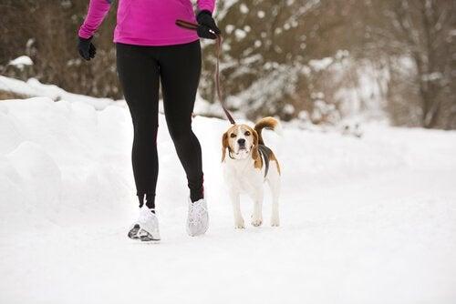 Lassie-effekten: Hunden din kan holde deg i form