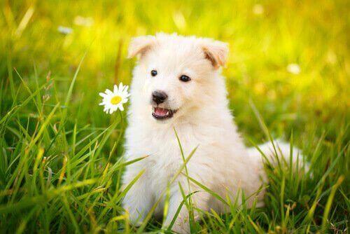 De beste sitatene om hunder som du vil elske