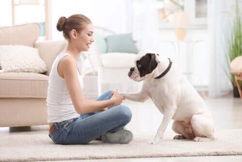 Tips for å trene kjæledyret ditt under hjemmekarantene