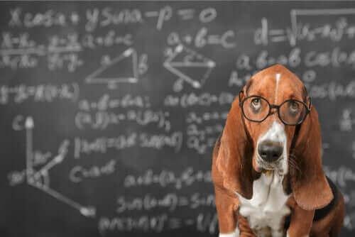 Er det mulig å stimulere intelligensen til en hund?
