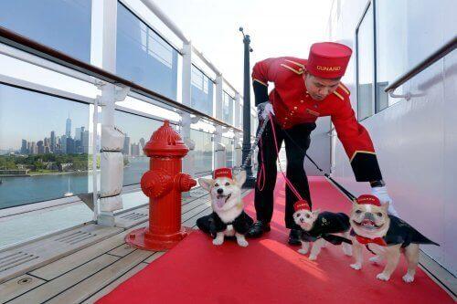 En pikkolo sammen med tre hunder utkledd som pikkoloer.