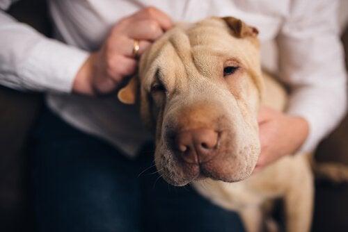 Hunden din kjenner deg bedre enn noen annen