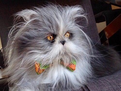 Katt eller hund? Møt Atchoum som er stjerne på sosiale medier
