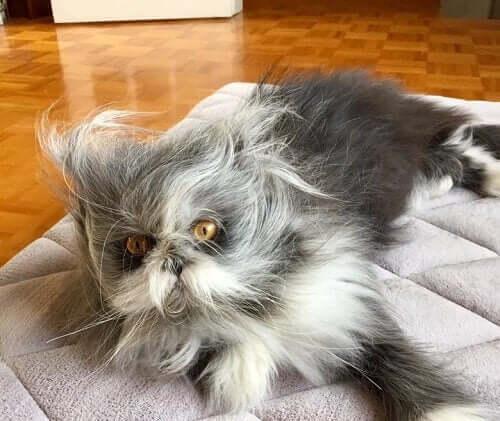 Katt eller hund? Med Atchoum er det ikke enkelt å si.