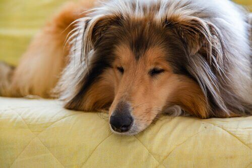 Å leve med en hund: Hvordan forbedre forholdet deres