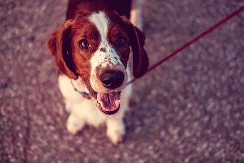 Hvilket land har flest hunder?