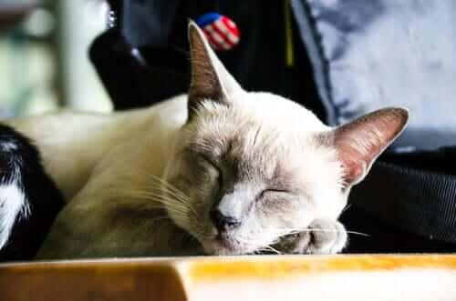En katt som sover i sin egen seng.