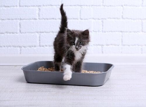 Hva man gjør om katten gjør fra seg utenfor kattedoen