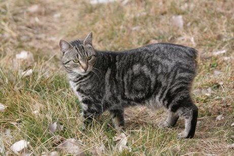 En katt som går i gresset