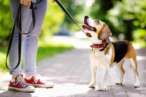 Hundetrening: Hvordan motivere hunden din