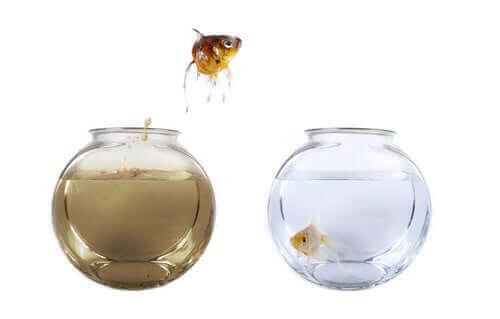 Hvordan regulere nitrogensyklusen i akvariet ditt