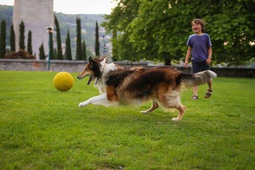 En hund og et barn som leker i parken