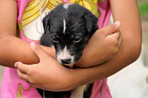 Bruk lek for å lære barnet ditt å ta vare på et kjæledyr