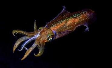 En blekksprut som kamuflerer seg selv som et eksempel på en blekksprut evne til å endre sin genetiske kode